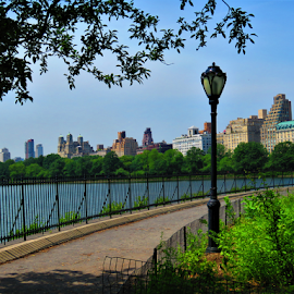 Along the lake by Hal Gonzales - City,  Street & Park  City Parks ( path, light, central park, pathway, nyc, lake,  )