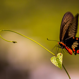 Butterfly On A Leaf. by John Greene - Animals Insects & Spiders ( orange, butterfly, macro, nature, green, beautiful, john greene, black )