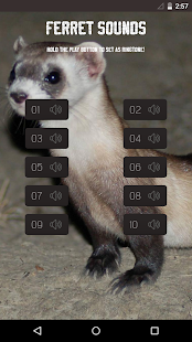 Ferret Sounds - screenshot
