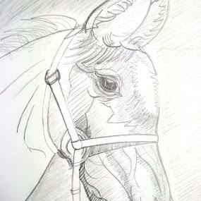 Basic Horse Head by Sandip Roy - Animals Horses ( calm, stallion, horse head, horse, brown, animal, eyes )