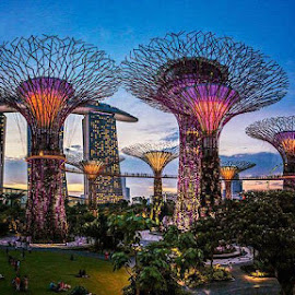 Singapure by Alex by Alexandre Oliveira - Buildings & Architecture Office Buildings & Hotels