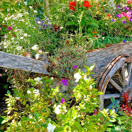 Wagon of Wonders by Barbara Brock - Nature Up Close Gardens & Produce ( old wagon with flowers, wagon and flowers, wooden wagon,  )