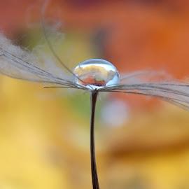 by OL JA - Nature Up Close Natural Waterdrops