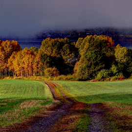 by Harald Gjerholm - Landscapes Prairies, Meadows & Fields ( october morning ligtomn colours fields )