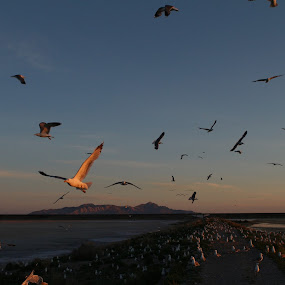 Flight by VAM Photography - Landscapes Sunsets & Sunrises ( great salt lake, nature, utah, travel, places, landscape )