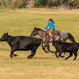 by Erin Schwartzkopf - Animals Horses ( ranch, ranching, horses, angus, wyoming, horse, cowgirl, western, cows,  )