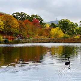 Mount Lofty Botanic Gardens - autumn by Zdenka Rosecka - City,  Street & Park  City Parks