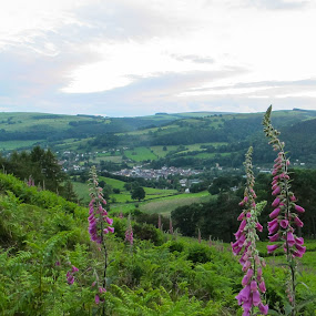 Llangollen Hilltop by Judy Smith - Novices Only Landscapes ( hillside, llangollen, wales, foxglove, scenic )
