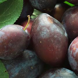 Plums by Anitta Lieko - Food & Drink Fruits & Vegetables