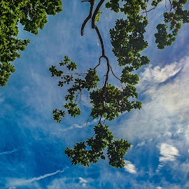 Looking Up by Becky Walker - Novices Only Landscapes ( clouds, the sun, sky scape, beautiful, beauty, sunlight, pretty, sun, clouds in the sky, blue sky, sky, tree, nature, blue, sky view, trees, sunshine, earth, looking up, natural, skyscape )