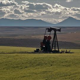 by Jolene Schack Dommer - Landscapes Prairies, Meadows & Fields