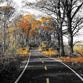 Cycling Pelham Bay Park, NY by Joseph Tague - City,  Street & Park  City Parks ( ride, city scene, autumn leaves, park, bay, autumn, biking, trail, parks, autumn colors, bicycle )
