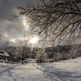 Winter fairytale by Rombe Kasňa - Landscapes Weather ( winter, tree, trees, house, scenery, landscape, shadows, sun rays )