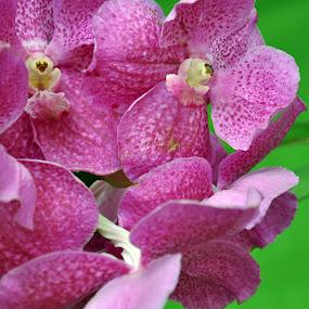 by Debanjan Goswami - Flowers Flower Gardens (  )