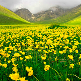 wildflower  by Mustafa Tor - Flowers Flowers in the Wild ( mountain, wildflower, yellow, flowers, yellow flower )