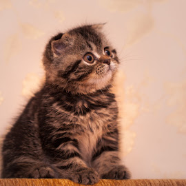 Kitty by Yuriy Lagno - Animals - Cats Kittens ( cat,  )