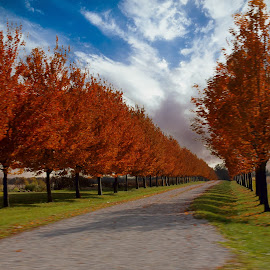 Orange Between the Lines by Kelley Conkling - City,  Street & Park  City Parks ( city parks, park, tree, autumn, parks, trees, road )