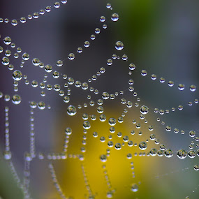 Caught in the Web by Bob Minnie - Abstract Macro ( spider web, macro, awesome, dew, cool )