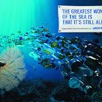 Campanha do Greenpeace alertando para o impacto de as embalagens não serem recicladas.