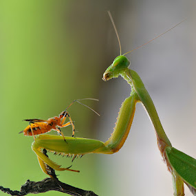 negotiation by Nordin Seruyan - Animals Insects & Spiders