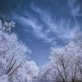 Flooded beauty by Tammy Scott - City,  Street & Park  City Parks ( tree tops, flooding, infrared, beauty in nature, trees, park, flood )