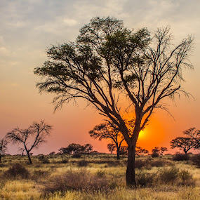 Kalahari sunset by Theuns de Bruin - Landscapes Sunsets & Sunrises ( k s )