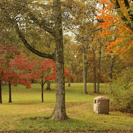 Color of Fall by Karen Carter - Uncategorized All Uncategorized ( autumn, colors, fall, trees, leaves )