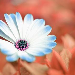 by Kelvin Đào - Nature Up Close Flowers - 2011-2013