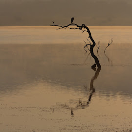 Cold Heron by Tony Wilson - Landscapes Travel ( mankwe hide, pilansberg national park, south africa, pilansberg, heron, mankwe dam )