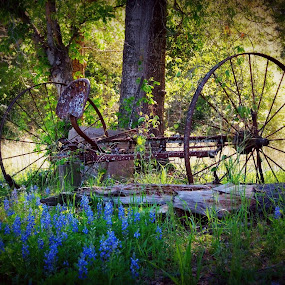 Old Farming equipment with Bluebonnets by Brenda Shoemake - Artistic Objects Technology Objects