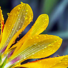 by Thomas Thain - Nature Up Close Natural Waterdrops