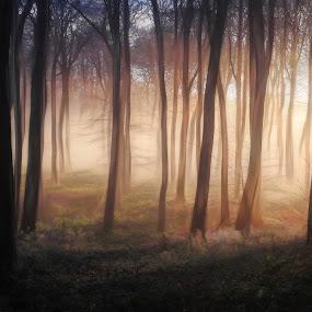 Woodland Winter Morning by Ceri Jones - Landscapes Forests ( woodlands, trees, forest, sunlight, morning, woods, mist )