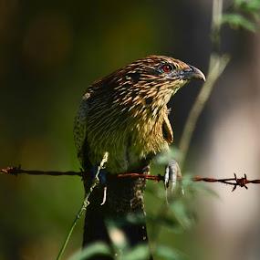take my photo please by Jason Day - Animals Birds ( animals, please, take, photo, my )