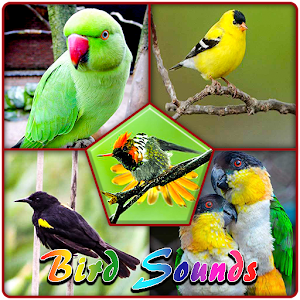 Birds Sweet Sounds