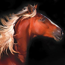 Paso horse by Susan Byrd - Animals Horses