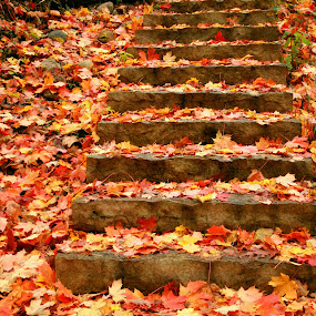 Step into Fall by Nancy Tonkin - Nature Up Close Leaves & Grasses (  )