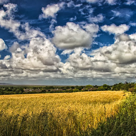 by Tracey Dolan - Landscapes Prairies, Meadows & Fields