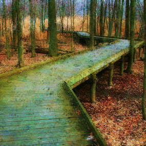 Walk Through The woods by Dennis Granzow - Landscapes Travel ( fall season, ohio, digital art, landscape, woods, boardwalk )