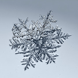 1 mm snoflake on window at night by Kevin Adams - Nature Up Close Water