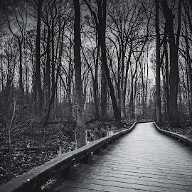 The Path Less Taken by Mike Martin - Landscapes Forests ( tree, nature, black and white, path, wildlife, great swamp, forest, nj, boardwalk, new jersey )
