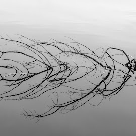 Reflection by Eric Wellman - Abstract Patterns ( reflection, branch, lake )