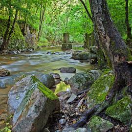 by Siniša Almaši - Landscapes Forests ( nature, trees, forest, view, stones, landscape, light, rocks, woods )