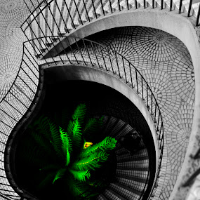 Splash by Artem Kevorkov - Buildings & Architecture Architectural Detail ( abstract, plant, building, b&w, stairs, black and white, green, curved, flower, curves, mall )