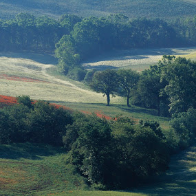 Tuscan terrain at sunrise by Gale Perry - Landscapes Prairies, Meadows & Fields ( field, hills, tuscany, small pond, red poppies, grass, dew, curved row of trees, sunrise,  )