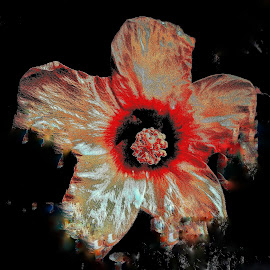 The Bloody Hibiscus by Erl de Jose - Novices Only Flowers & Plants ( hibiscus, nature, abstract art, art, digital art, plants, digital photography, flower )