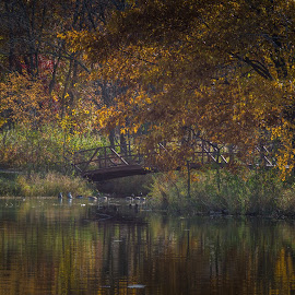 by Chandra Whitfield - City,  Street & Park  City Parks ( water, nature, park, autumn, colors, fall, reflections, bridge )