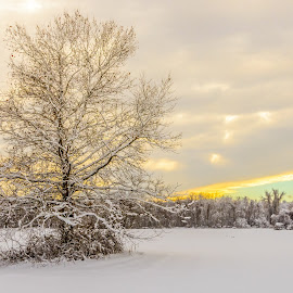 Snowy Sunrise by John Sinclair - Landscapes Sunsets & Sunrises ( sky, snow, sunrise, landscape )