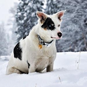 Loop in the Snow - 4372.jpg