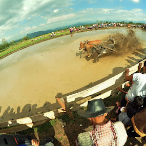 Cow Racing by Deddy Hariyanto - Sports & Fitness Other Sports ( sport, culture )