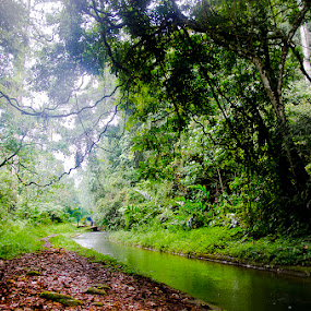 by Nopri M - Landscapes Forests